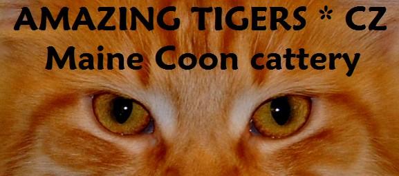 wwww.amazing-tigers.cz